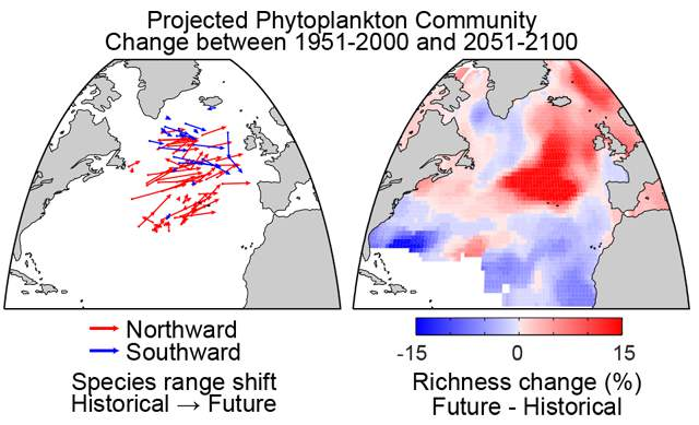 The projected change in core biogeographic range between historical (1951-2000) and future conditions (2051-2100) for 87 phytoplankton species is indicated in the left panel; red arrows are taxa moving north, blue arrows are taxa moving south. The range shifts produce changes in community composition and species richness. The right panel indicates the projected change in species richness over the coming century.