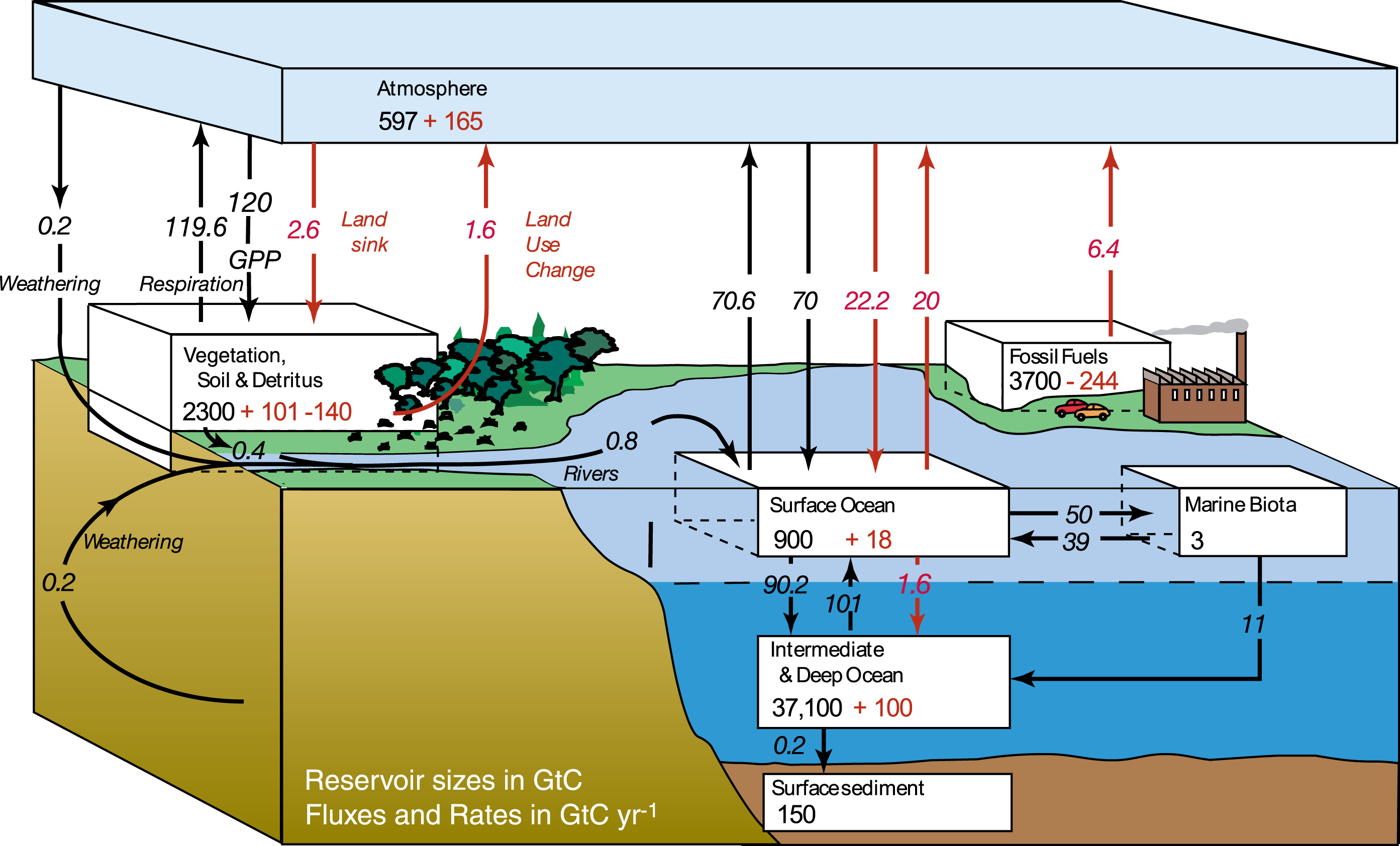 Anthropogenic carbon cycle