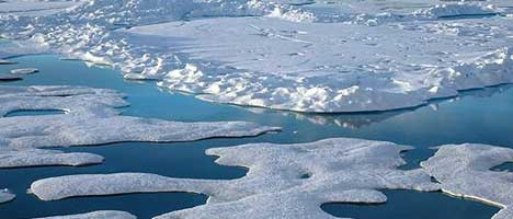 Arctic ice trends